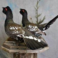 Moores Swamp -  Natural Wildlife Creations