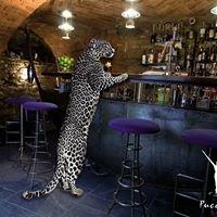 Cocktailbar Puccini