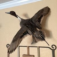 Pintail Slough Land Company