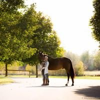Noble Touch Equine Massage Therapy