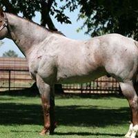 Western 37 Barrel Horse Prospects
