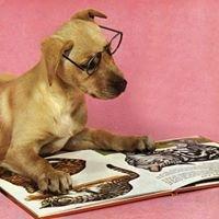 Libreria Redhound