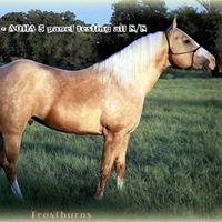 Frostburns - AQHA Stallion