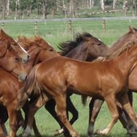 Butterfield Performance Quarter Horses