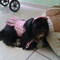 Peluza Fashion Peluquería Canina