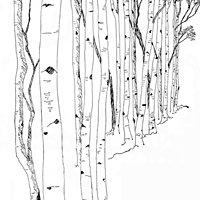 White Birch Wellness