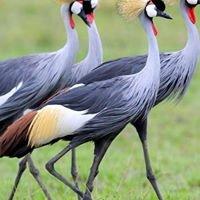 Crane Travel and Tours Limited