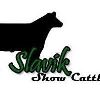 Slavik Show Cattle