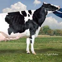 Kinyon Holsteins