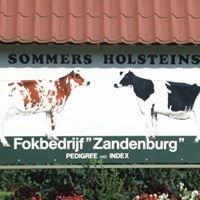 Zandenburg Holsteins