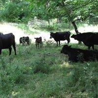Hidden Creek Farm - Irish Dexter Cattle