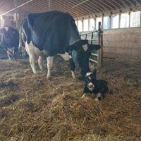 Dallera Holsteins LLC