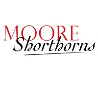 Moore Shorthorns