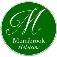 Murribrook Holsteins