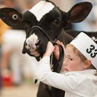 Beclah Park Holsteins