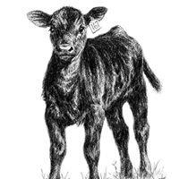 Kerr Cattle Company LLC