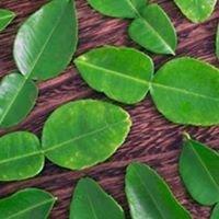 Kaffir lime leaves Spain