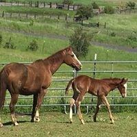 R Bar T Quarter Horses