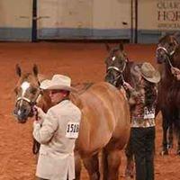 RD Rocka Fella ~ Multiple World Champion Stallion & Sire of World Champions