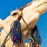 Camel Excursions Morocco, Sahara Desert Tours