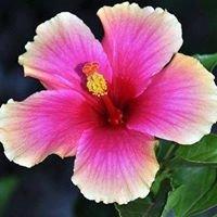 Floral Expressions Woodbridge