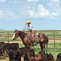 HeartOpenA Ranch Geldings