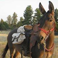 Marirose Six-Mule & Horse Training