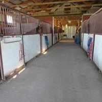Susie Walton Quarter Horses
