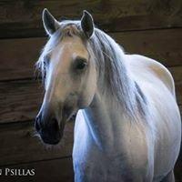 Ingels Horse Boarding