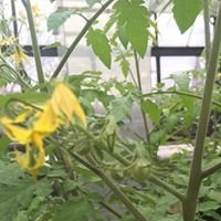 UIC Nutrition Teaching Garden