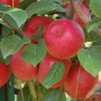 Blok Orchard