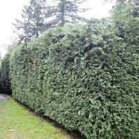 Life on the Hedge Hardscape and Fence Co. LLC