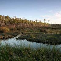 Big Branch Marsh National Wildlife Refuge - Boy Scout Road Boardwalk