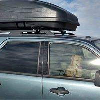Cozy Pet Taxi &  Military Deployment Pet Care