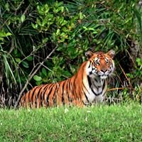 "Save the world's largest mangrove forest - ""Sundarbans"""