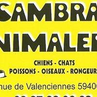 Cambrai Animalerie