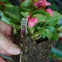 Tim Schinke Horticulture Services