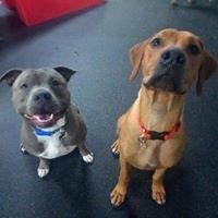 Learning Pawsibilities, Dog Training School