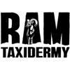 Ram Taxidermy