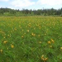 青森県の野生植物(The Wildflowers of Aomori)