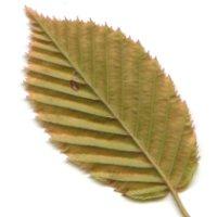 Biomasserecycling