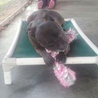 Friends of Shenandoah Co. Animal Shelter
