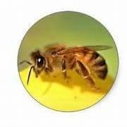 Honey (Tyler's Honey)