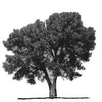 Pine Springs Association