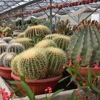 Cactus Esterel