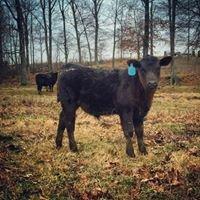 Old 59 Cattle Co, Mason, TN