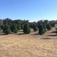 Brewer Christmas Tree Farm