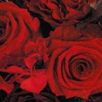 fleur ANTWHARF / フルール アントワーフ