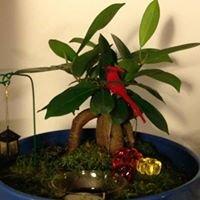 Bonsai Plantscapes