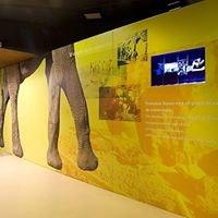 Museo Arqueológico y Paleontológico de La Rinconada